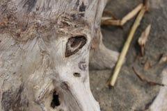 Struttura nel legno Fotografie Stock