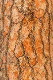 Struttura o fondo verticale rossa della corteccia di pino fotografie stock libere da diritti