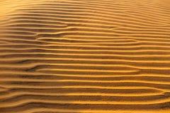 Struttura ondulata sabbiosa gialla delle dune Immagine Stock