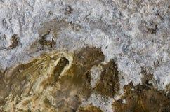 Struttura organica geologica Immagine Stock
