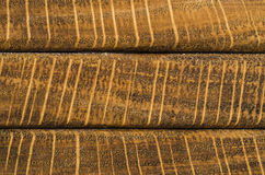 Struttura orizzontale del grano dell'estremità della quercia della banda Fotografia Stock Libera da Diritti