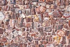 Struttura petrificata dell'albero che assomiglia alle pietre. fotografia stock