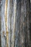 Struttura posteriore del reticolo dell'albero Fotografie Stock
