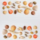 Struttura quadrata con le conchiglie ed i coralli su fondo bianco Immagini Stock