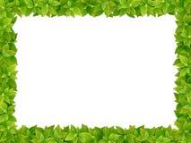 Struttura quadrata dalle foglie verdi fresche Immagini Stock Libere da Diritti