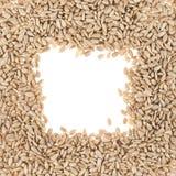 Struttura quadrata dei semi di girasole Immagine Stock Libera da Diritti