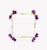 Struttura quadrata del fiore dei fiori di una viola della foresta su un fondo bianco Immagini Stock