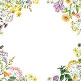 Struttura quadrata dell'acquerello con le piante medicinali Fotografia Stock Libera da Diritti