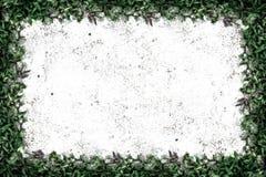 Struttura quadrata dell'erba con copia-spazio sul fondo della sabbia Immagini Stock