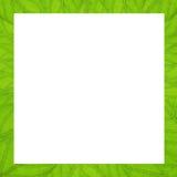 Struttura quadrata delle foglie verdi di struttura Fotografia Stock