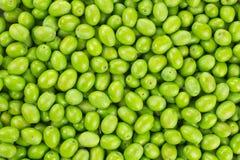 Struttura raccolta fresca del reticolo dell'oliva verde fotografia stock