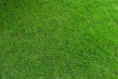 Struttura reale dell'erba verde Fotografia Stock Libera da Diritti