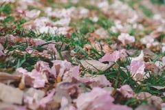 Struttura rosa del fondo della natura del fiore Fotografia Stock Libera da Diritti