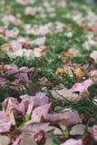 Struttura rosa del fondo della natura del fiore Fotografia Stock