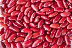 Struttura rossa del fagiolo nano Immagini Stock Libere da Diritti