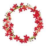 Struttura rossa dell'orchidea, struttura floreale del cerchio della corona, vettore isolato Fotografie Stock