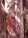 Struttura rossa della corteccia Fotografie Stock Libere da Diritti