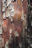 Struttura rossa della corteccia di albero Fotografie Stock