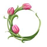 Struttura rotonda con l'illustrazione rosa dei tulipani Immagine Stock
