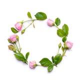 Struttura rotonda dei fiori delicati Rose dentellare isolate su priorità bassa bianca Fotografia Stock