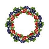 Struttura rotonda dell'uva passa dell'acquerello Fotografia Stock