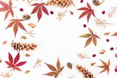 Struttura rotonda delle foglie di caduta di autunno, dei fiori secchi e dei coni su fondo bianco Disposizione piana, vista superi Fotografia Stock