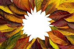Struttura rotonda fatta delle foglie verdi gialle, rami su fondo bianco Disposizione piana, vista superiore Di autunno vita ancor immagine stock