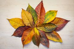 Struttura rotonda fatta delle foglie verdi gialle, rami su fondo bianco Disposizione piana, vista superiore Di autunno vita ancor immagini stock