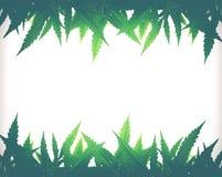 Struttura sativa della foglia della cannabis verde intenso immagini stock