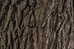 Struttura scura della corteccia di albero immagine stock