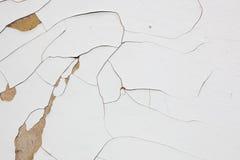 Struttura secca bianca della vernice Immagini Stock