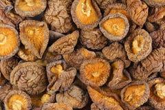 Struttura secca del fondo dell'alimento del primo piano dei funghi di shiitake Fotografie Stock Libere da Diritti