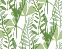 Struttura senza cuciture con le piante e le erbe trasparenti Immagine Stock