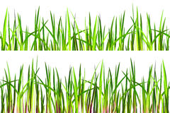 Struttura senza cuciture dell'erba su bianco Fotografie Stock