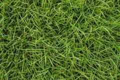 Struttura senza cuciture dell'erba verde Immagini Stock