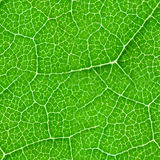 Struttura senza cuciture della foglia verde Immagine Stock Libera da Diritti