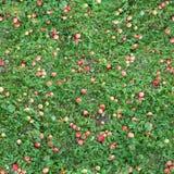 Struttura senza cuciture quadrata dell'erba con le mele Fotografia Stock