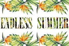Struttura senza fine della giungla di estate di slogan Fotografia Stock Libera da Diritti