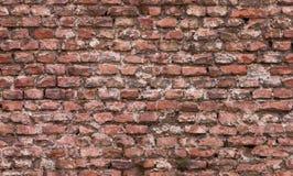 Struttura senza giunte del muro di mattoni Immagini Stock