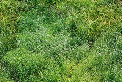 Struttura senza giunte dell'erba Fotografia Stock