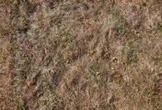 Struttura senza giunte di vecchia erba Fotografia Stock