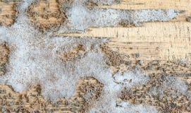 Struttura spessa della muffa su legno fotografia stock