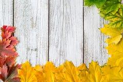 Struttura stagionale delle foglie di acero autunnali con colore di pendenza su fondo di legno bianco Immagini Stock