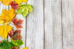 Struttura stagionale delle foglie di acero autunnali su fondo di legno bianco Fotografia Stock Libera da Diritti