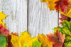 Struttura stagionale delle foglie di acero autunnali su fondo di legno bianco Fotografia Stock