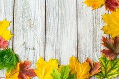 Struttura stagionale delle foglie di acero autunnali su fondo di legno bianco Fotografie Stock Libere da Diritti