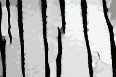 Struttura stracciata di una carta lacerata disposta su un fondo nero fotografia stock libera da diritti