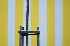 Struttura a strisce gialla della parete Immagini Stock