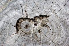 Struttura su legno per fondo fotografia stock