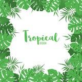 Struttura sveglia con le foglie verdi tropicali esotiche illustrazione di stock